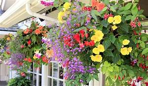 Top 10 Beautiful Flowers Which Can Grow In A Hanging Basket