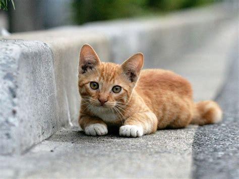 cats the my free wallpapers nature wallpaper cat
