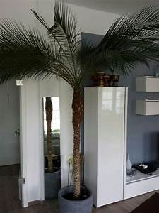 Palmen Für Drinnen : palmenart pflege seite 1 palmen ~ Michelbontemps.com Haus und Dekorationen