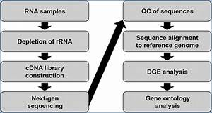 A Workflow Guide To Rna