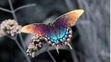 Butterfly flower wallpapers wide full. Butterfly Wallpapers HD - Wallpaper Cave
