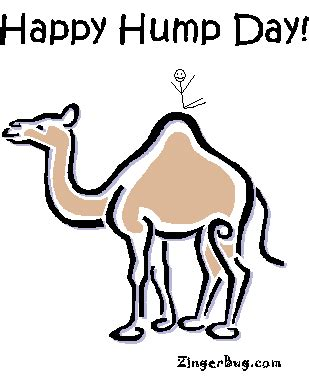 Image result for hump day comments and graphics