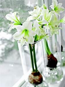 Blumen Zu Weihnachten : winter bl hende pflanzen als herrliche weihnachtsdekoration ~ Eleganceandgraceweddings.com Haus und Dekorationen