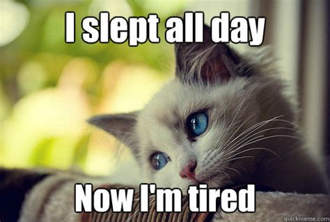 Tired Cat Meme - i slept all day now i m tired first world problems cat quickmeme