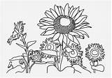 Sunflower Coloring Farm Field Drawing Pages Getdrawings sketch template