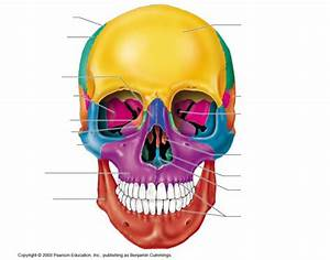 Anterior Skull Bones
