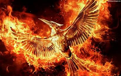 Hunger Mockingjay Games Wallpapers Banner Wall Fire
