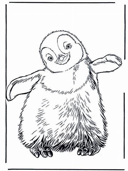 Penguin Zoo Funnycoloring Coloring Pages Advertisement