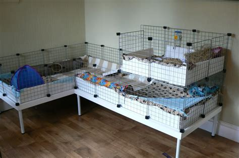 guinea pig hutch size diy table to fit custom cage sizes guinea pig cage ideas