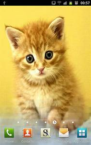 cute puppies and kittens to her wallpaper collection wallpapers