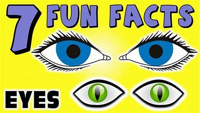 Facts Eye Eyes Fun Funny Glasses Colors