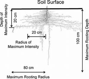 Root System And Distribution Parameters For Pumpkin Plants