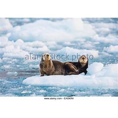 Animals Picture Stock Photos &