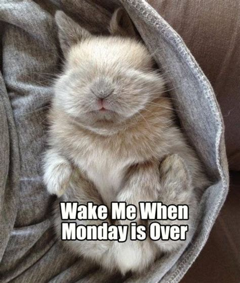 Monday Memes Funny - monday is almost over quotes quotesgram