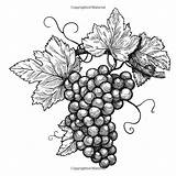 Crackers Wine Coloring sketch template