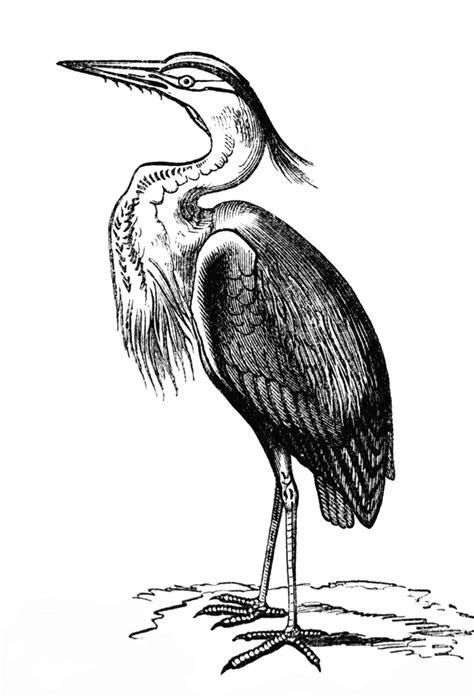 Heron | ClipArt ETC | Heron, Heron tattoo, Art