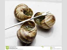 Escargot stock photo Image of tasty, fork, cooking