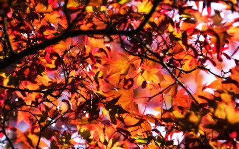 Beautiful Fall Backgrounds 18187 1680x1050px