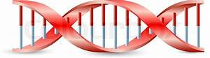 Dna Symbol  Vector On The White Background