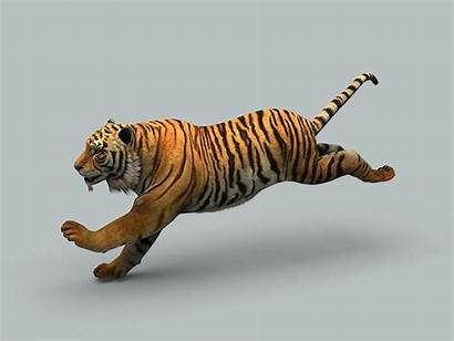 Tiger Wildlife Models Animals
