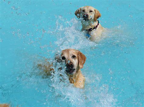 piscine pour chiens video toutrien