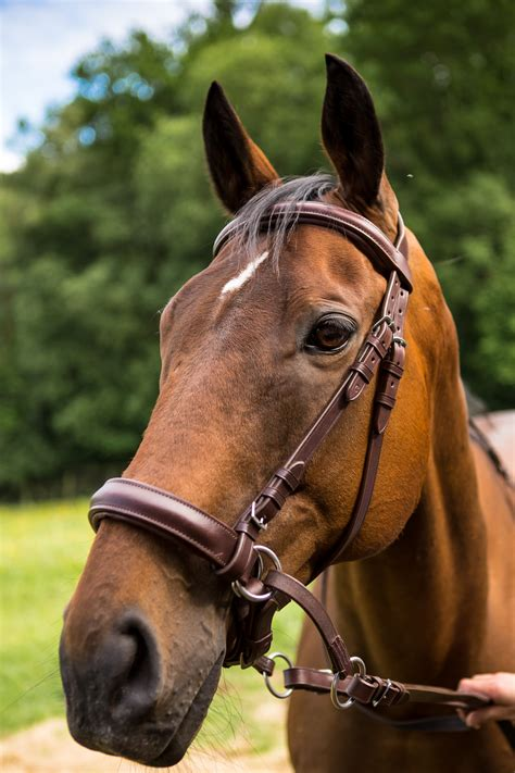 bitless bridles why