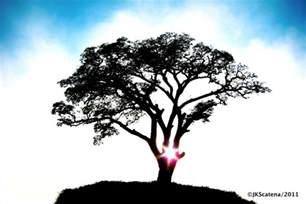 Life Tree Silhouette