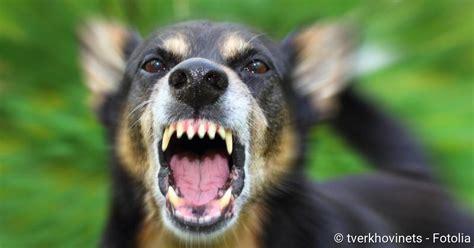tollwut rabies ansteckungsgefahr symptome therapie