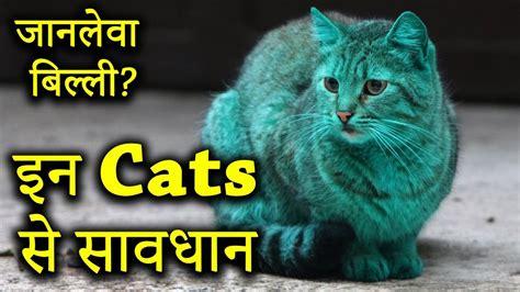 cat dangerous breeds