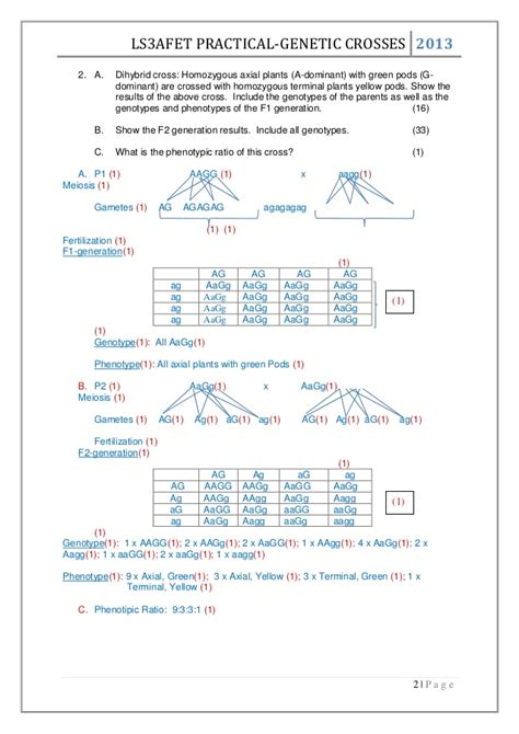 Collection Of Worksheet Dihybrid Crosses Unit 3 Genetics  Download Them And Try To Solve