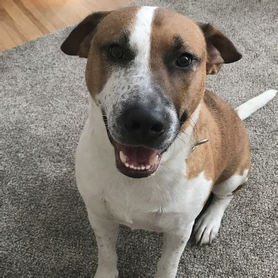 murphy   contagious smile  northeast animal shelter