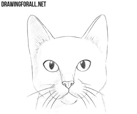 draw  cat head drawingforallnet