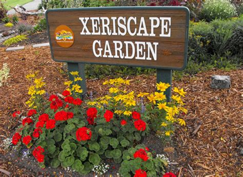 how much does xeriscaping cost how to create a xeriscape garden outdoortheme com