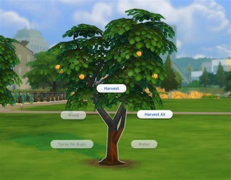harvestable orange tree  plasticbox  tsr sims  updates