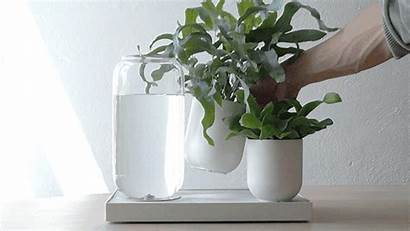 Plants Watering System Self Tableau Plant Automatic