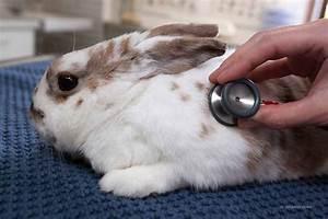 Was Ist Ein Widder : kaninchenschnupfen bei kaninchen diagnose behandlung prognose tiermedizinportal ~ Eleganceandgraceweddings.com Haus und Dekorationen