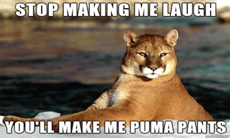 Puma Pants Meme - puma meme 28 images mexican word of the day puma stop making me laugh you ll funny puma
