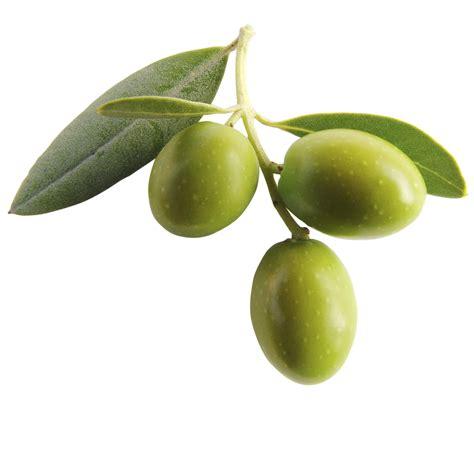 cuisine regionale l 39 olive la saveur de l 39 été à table