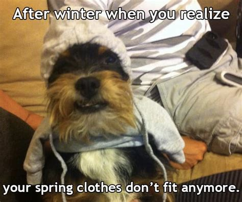 21 Funny Dog Pictures That Perfectly Sum Up How We Feel