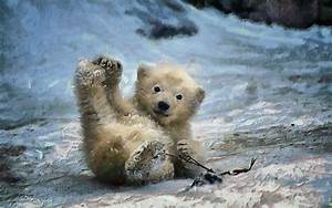 Baby Polar Bear Full HD Wallpaper and Background Image ...