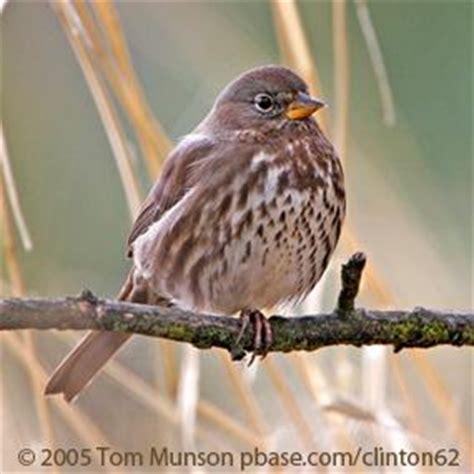 brown birds birdnote