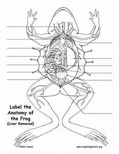 Frog Dissection Worksheet Answers