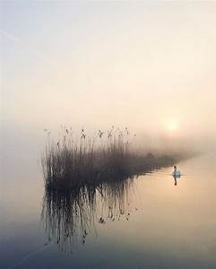 17 Best ideas about Foggy Morning on Pinterest