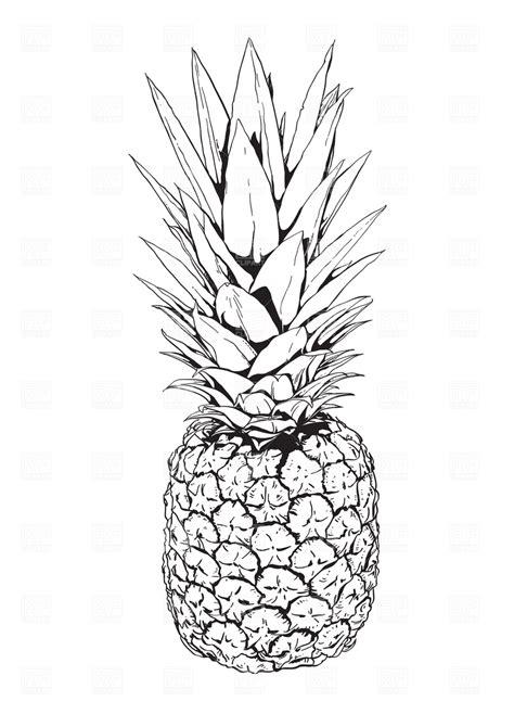 pineapple outline vector pineapple 1945 food and beverages royalty free