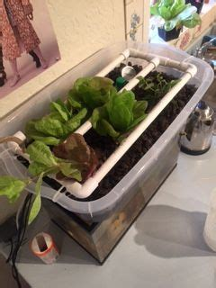 emily small aquaponic system appropedia