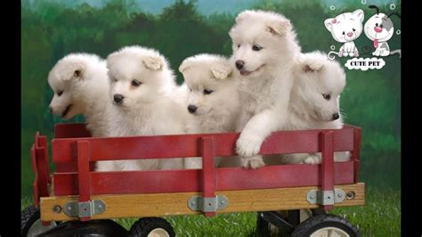 baby dogs cute  funny dog  compilation
