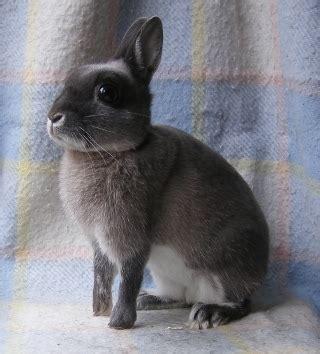 8 of the best pet rabbit breeds pethelpful