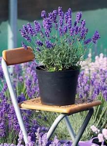 Winterharte Pflanzen Für Balkon : winterharte balkonpflanzen mittagsblumen delosperma winterharte pflanzen balkonbepflanzung ~ Somuchworld.com Haus und Dekorationen