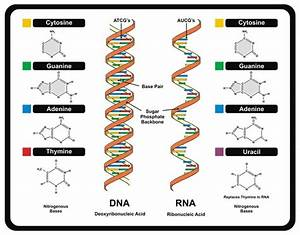 Getting Knows To Your Dna