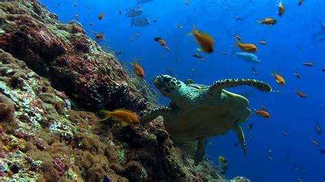 Animated Sea Wallpaper - animated sea turtle wallpaper iphone wallpapersafari